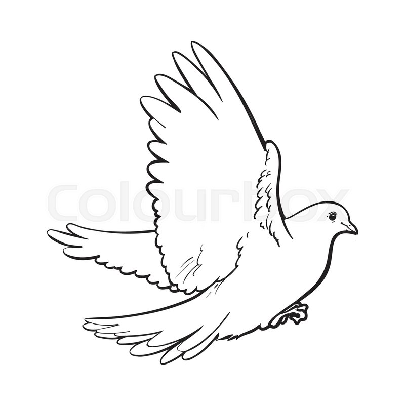 free flying white dove sketch style vector illustration isolated on white background realistic hand drawing of white dove pigeon flapping wings