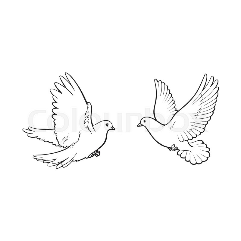 stock vector of two free flying white doves sketch vector illustration isolated on white