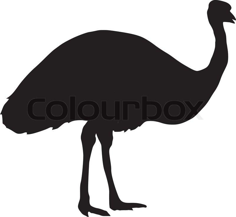 Line Art Emui : Silhouette of emu stock vector colourbox