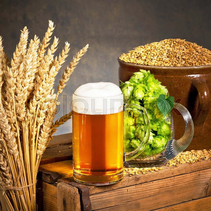 Glass of beer with raw material for beer production, stock photo