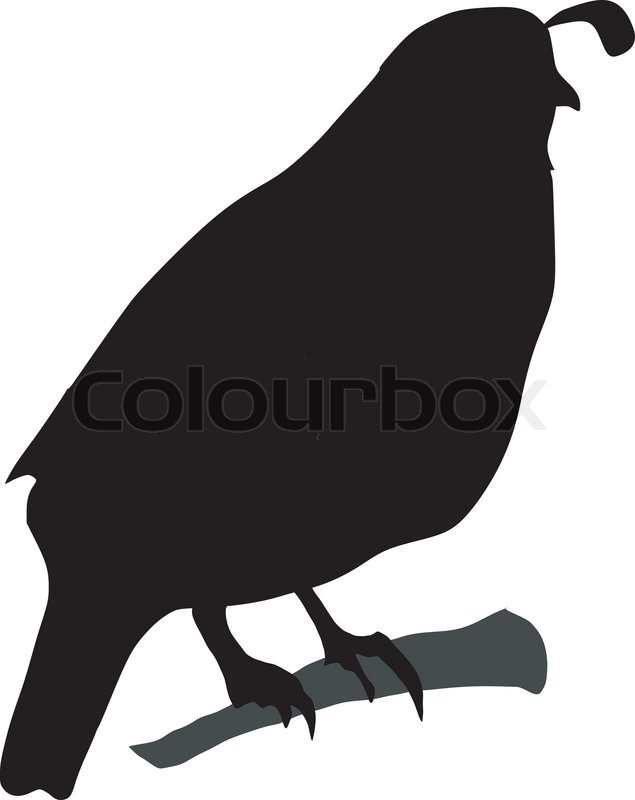 Quail Silhouette Stock vector of...