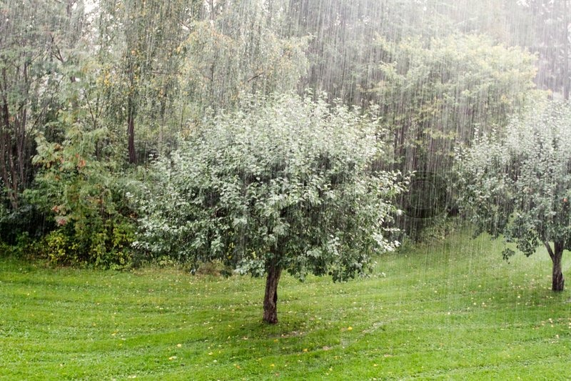 apfelbaum regen schlechtes wetter herbst gr n stockfoto colourbox. Black Bedroom Furniture Sets. Home Design Ideas