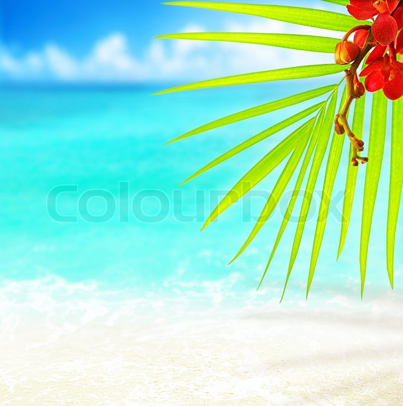 Tropical Beach And Peaceful Ocean: Selective Focus On Palm Tree Leaves Over Peaceful Tropical
