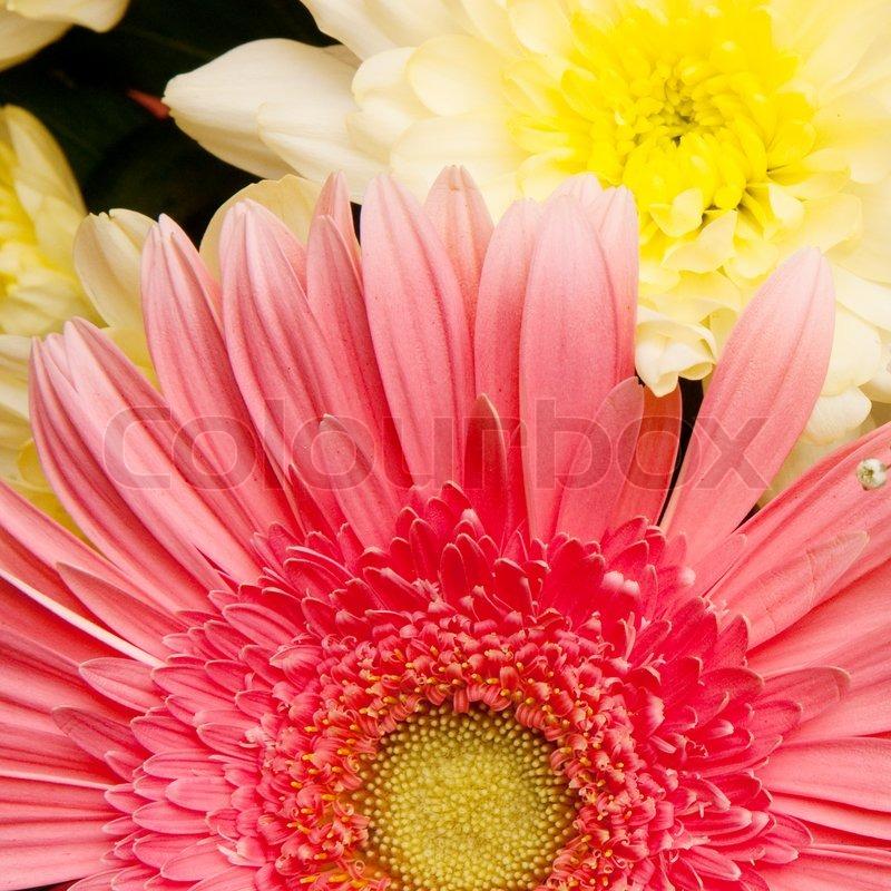 sch ner blumenstrau mit daisy und chrysanthemen. Black Bedroom Furniture Sets. Home Design Ideas