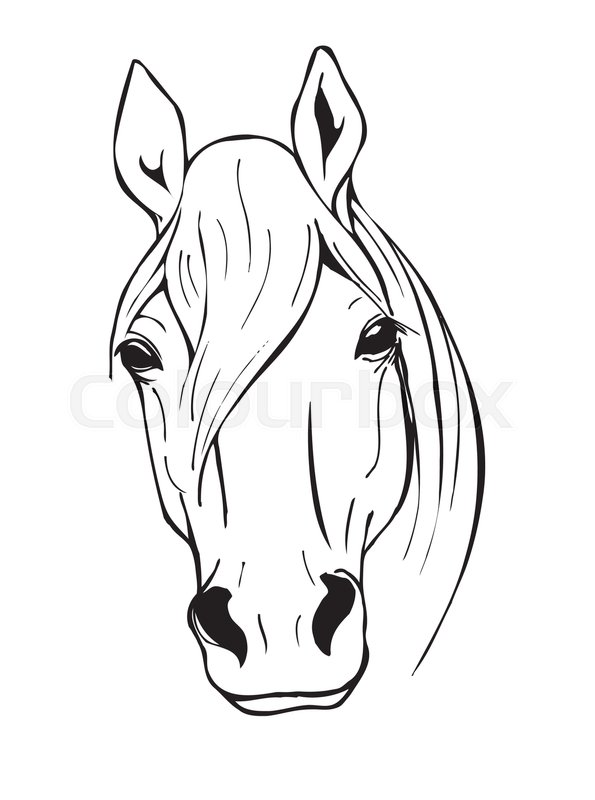 horse head, farm animal, black and white vector illustration in