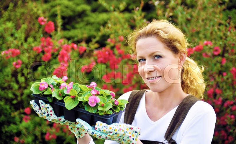 Young woman gardening, holding young flower plants, container-grown plant, woman planting begonia seedlings in garden, stock photo