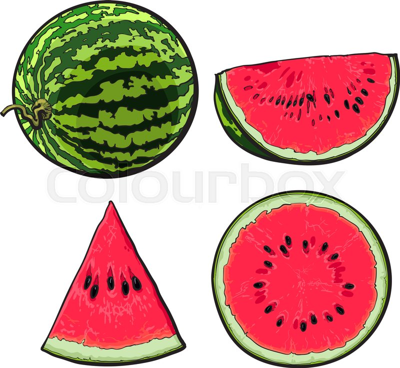 watermelon quarter half drawing vector sketch illustration whole slice ripe melon realistic water piece isolated hand background colourbox getdrawings sabelskaya
