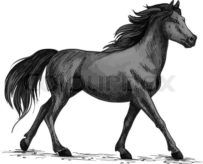 Horse Vector Sketch Running Or Walking Wild Black Raven