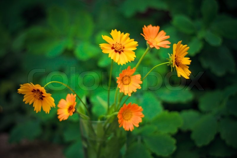 Beautiful Wild Yellow Flowers Stock Photo Colourbox
