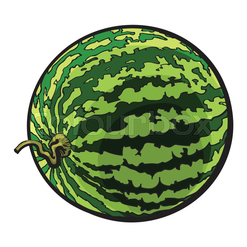 Perfect Whole Striped Watermelon With Stock Vector Colourbox