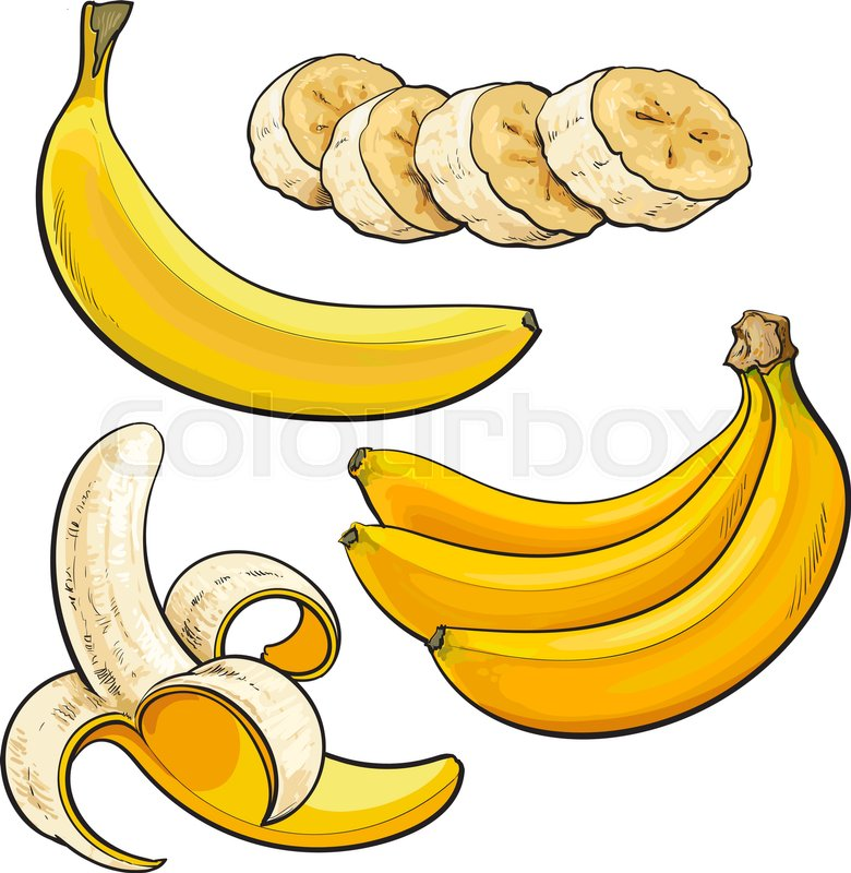 Realistic Hand Drawing Of Whole Peeled Sliced Banana And A Bunch Three Bananas Vector