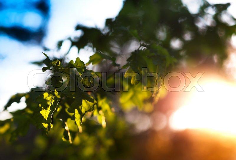 Dramatic tree leaves with light leak landscape background, stock photo
