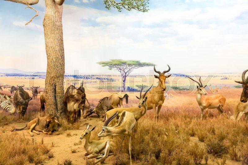 Big wild animals hiding from the heat in savanna. Thirst concept, stock photo