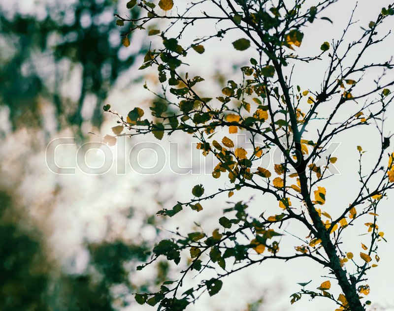 Horizontal vibrant autumn tree branch with sun leak bokeh background backdrop, stock photo