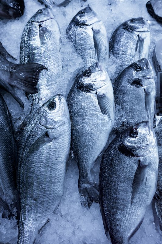 Fresh seafood. Fresh fish in the market. fresh dorada fish, stock photo