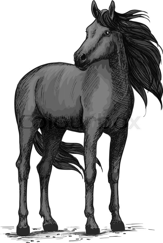 Black Horse Vector Sketch. Wild Mustang Stallion Standing With Turned Head. Farm Or Ranch Equine ...