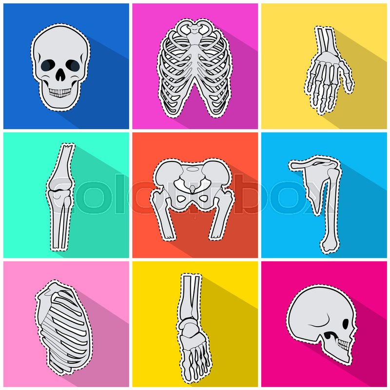 Skeleton icons set. Types of human bones on bright background. White ...