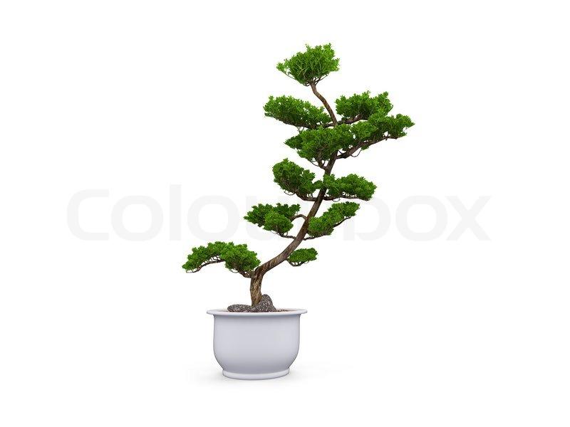 Kleiner Baum mit Topf auf einem weien Hintergrund  Stockfoto