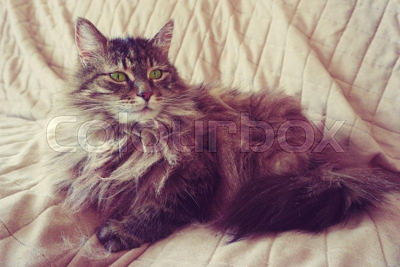 Cat Portrait - vintage style, stock photo