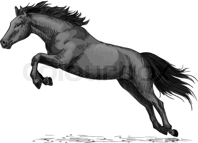 Horse Or Wild Stallion Running In Gallop And Jumping Over Black
