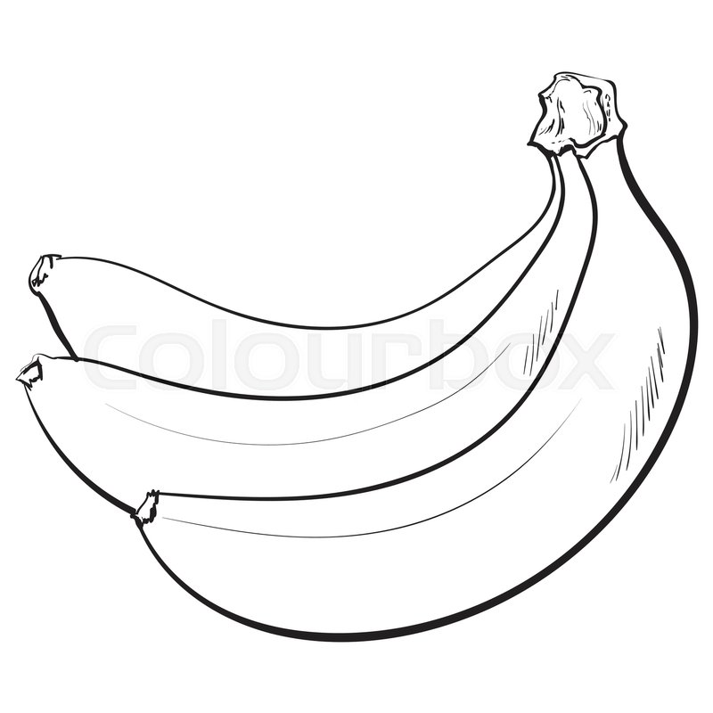 Black And White Bunch Of Three Unopened Unpeeled Ripe Bananas Sketch Style Vector Illustration Isolated On Background Realistic Hand Drawing