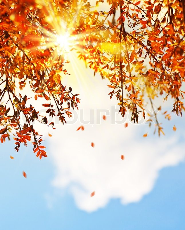Stock image of 'Beautiful autumn tree border with falling down old leaves over blue cloudy sky, abstract background, nature at fall'