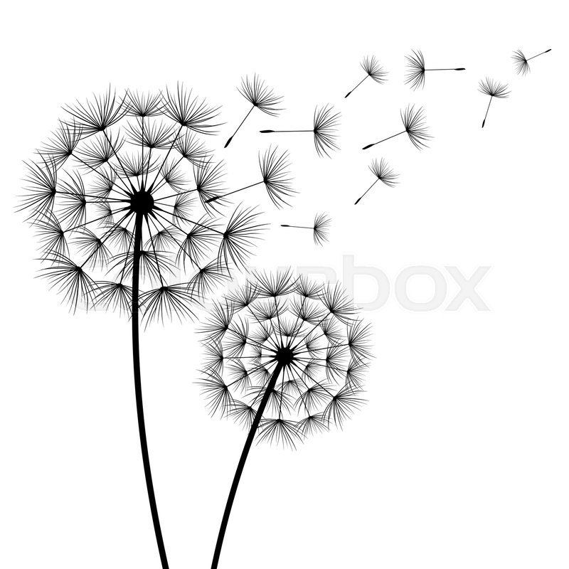 Two Stylized Black Dandelions Silhouette With Flying Fluff On White Background Floral Stylish Modern Wallpaper Summer Or Spring Flowers