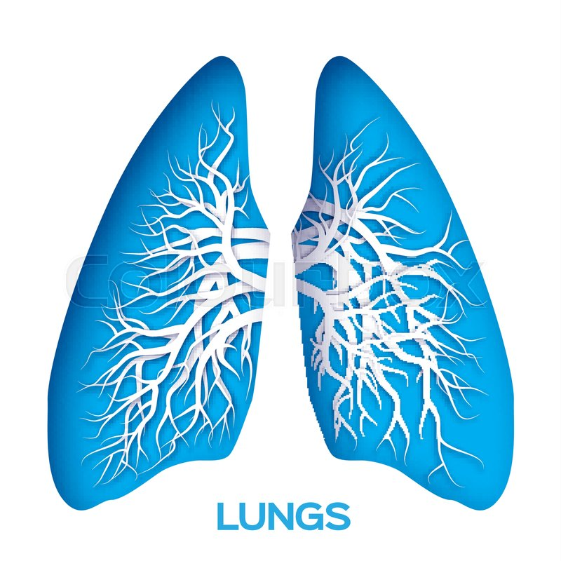 Lungs origami. Blue Paper cut Human Lungs anatomy with bronchial ...