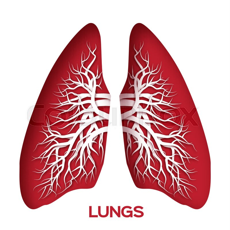 Lungs Origami Red Paper Cut Human Lungs Anatomy With Bronchial Tree
