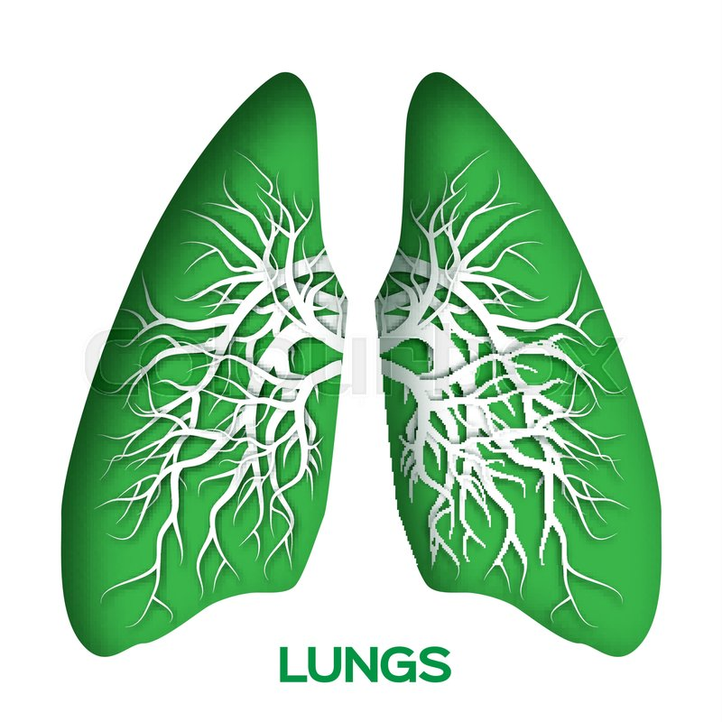 Lungs Origami Green Paper Cut Human Anatomy With Bronchial Tree Applique Vector Design Illustration