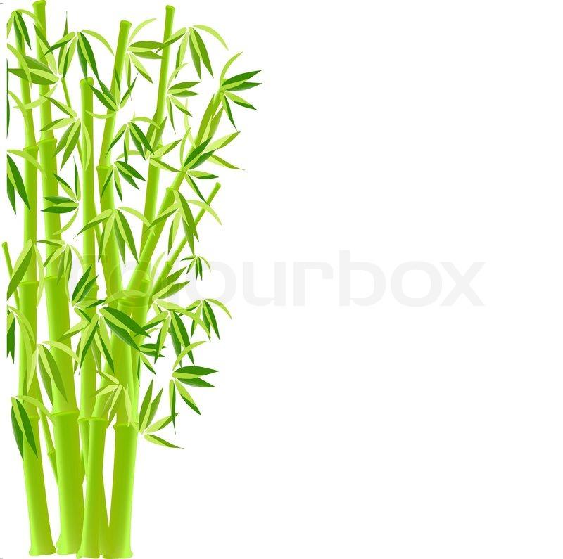 Vektor Illustration Von Bambus Vektorgrafik Colourbox