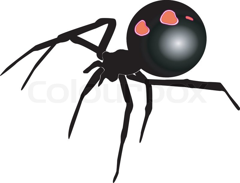Black Widow Stock Vector Colourbox