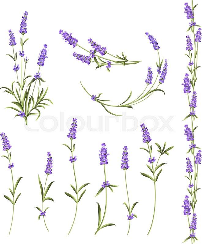 Textile Stock Distributors Mail: Lavendel, Luxuriös, Floral