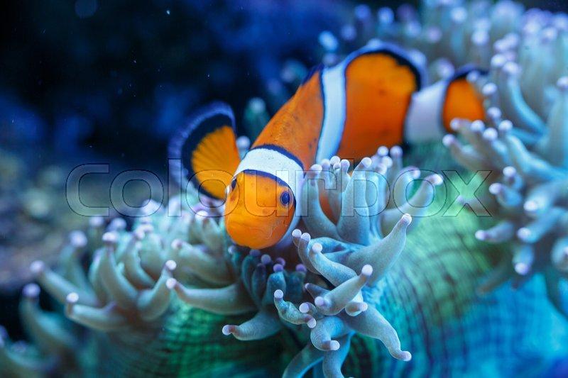 Wonderful And Beautiful Underwater Stock Image Colourbox