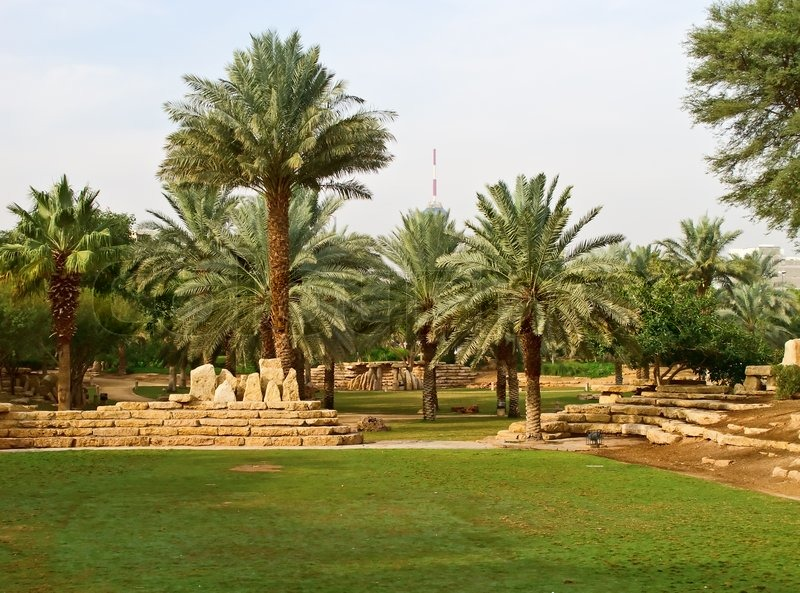 Palm Garden In The Riyadh City Saudi Arabia Stock Photo Colourbox