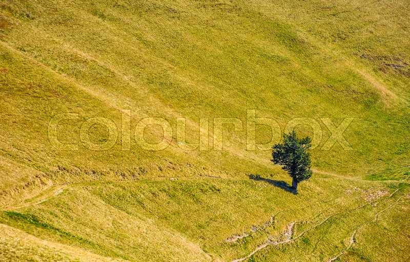 Few trees on a hill side meadow in high mountains on a summer day, stock photo