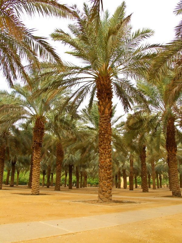 Riyadh Dating - Online Dating in Riyadh - LoveHabibi