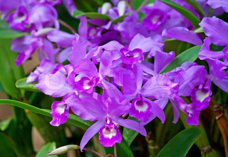 bunte orchideen im garten stockfoto colourbox. Black Bedroom Furniture Sets. Home Design Ideas