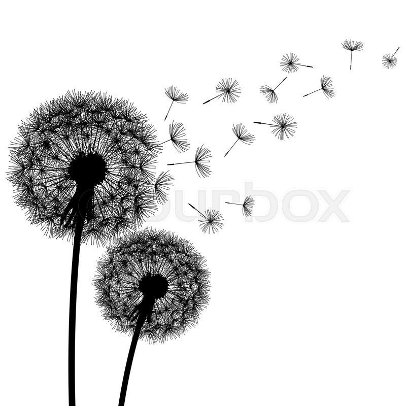 Two Delicate Black Dandelions Silhouette With Flying Fluff On White Background Floral Modern Stylish Wallpaper Summer Or Spring Flowers