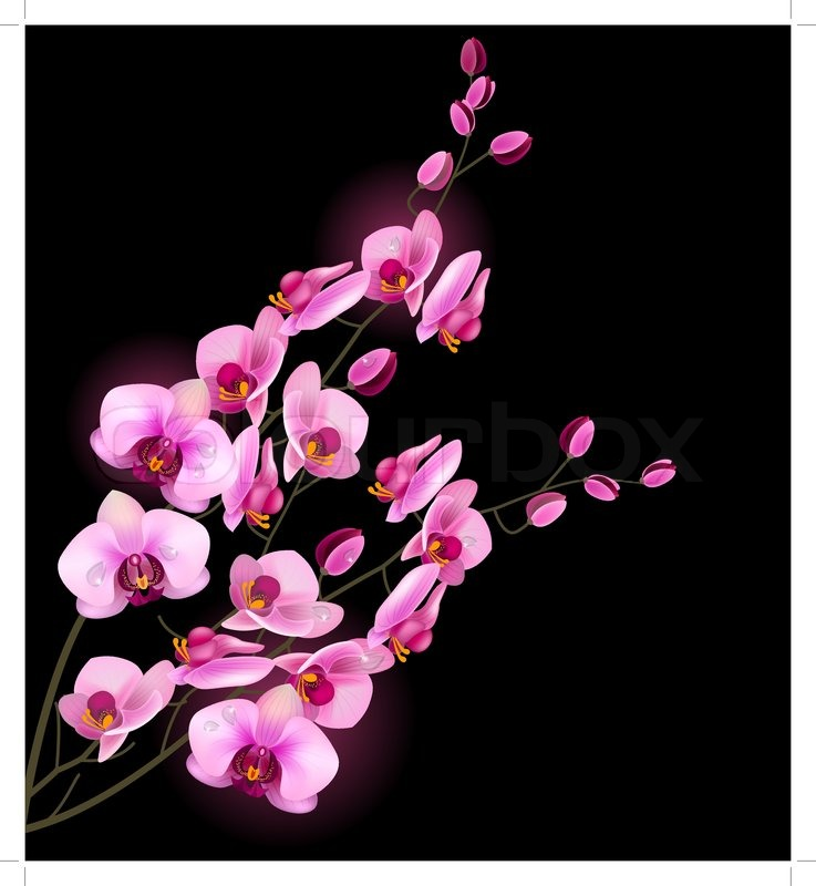 Orchid pink flower isolated on black background stock vector orchid pink flower isolated on black background stock vector colourbox mightylinksfo