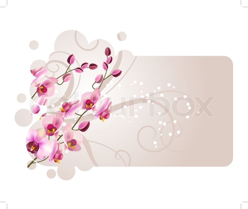 Ornate pastel frame with orchid pink flowers   Stock Vector   Colourbox