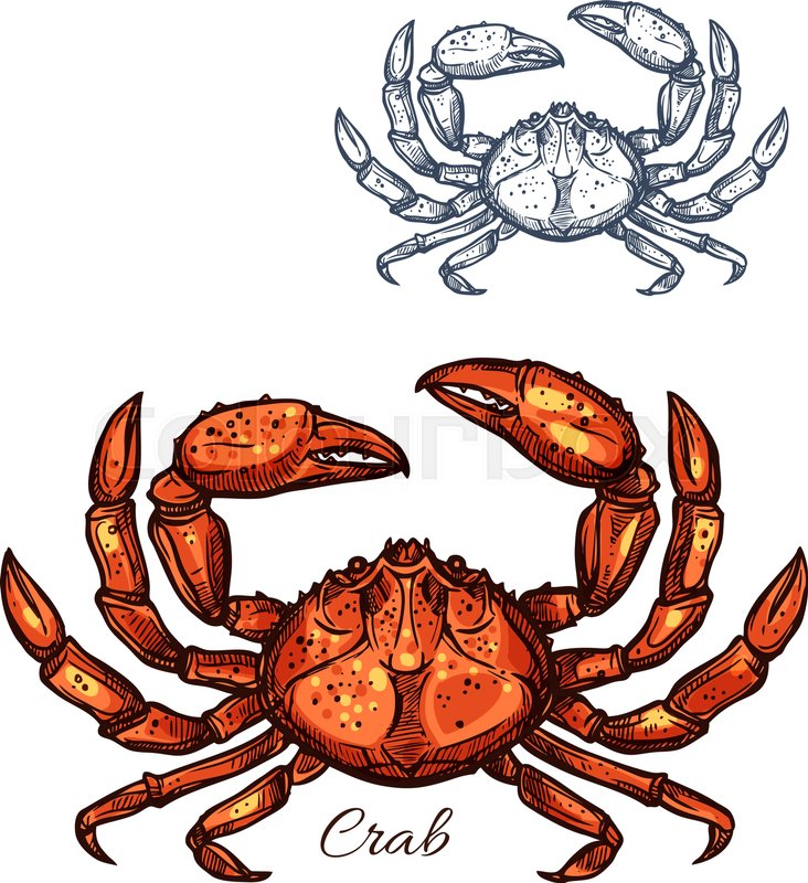 Crab Sketch Vector Icon Lobster Seafood And Marine Ocean Or