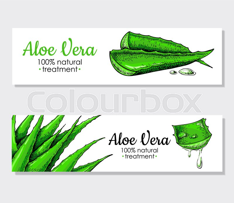 Vector aloe vera hand drawn banner. Natural cosmetic ingredient ...