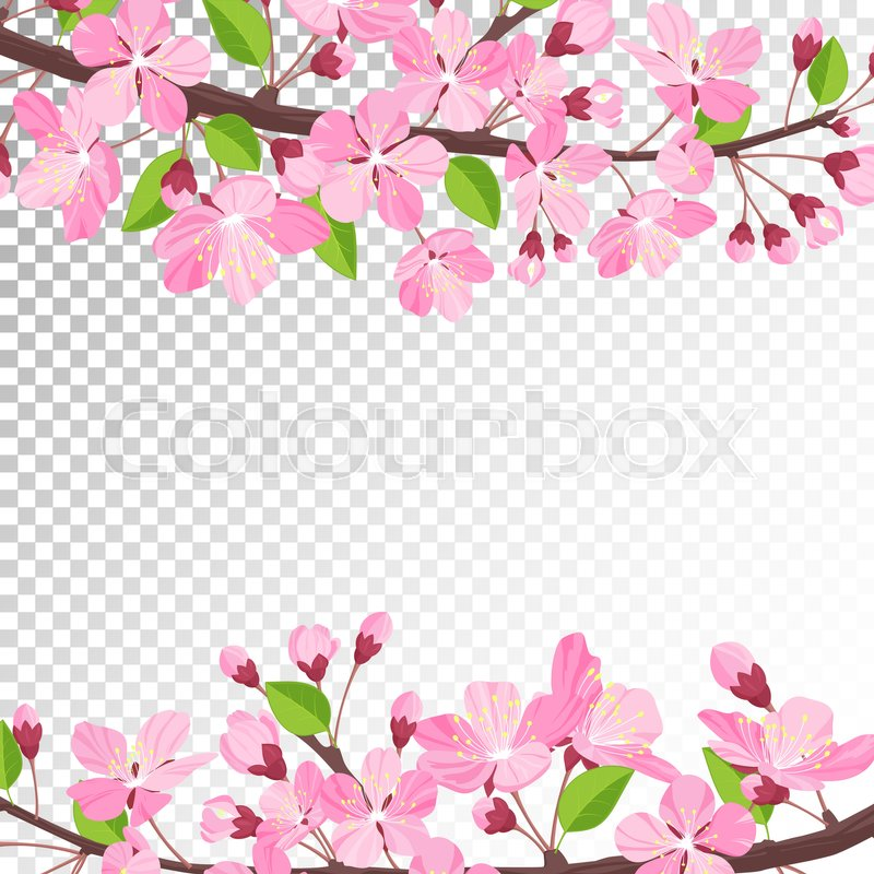 cherry blossom background pink spring flowers frame cartoon style rh colourbox com cherry blossom cartoon pic cherry blossom cartoon pictures