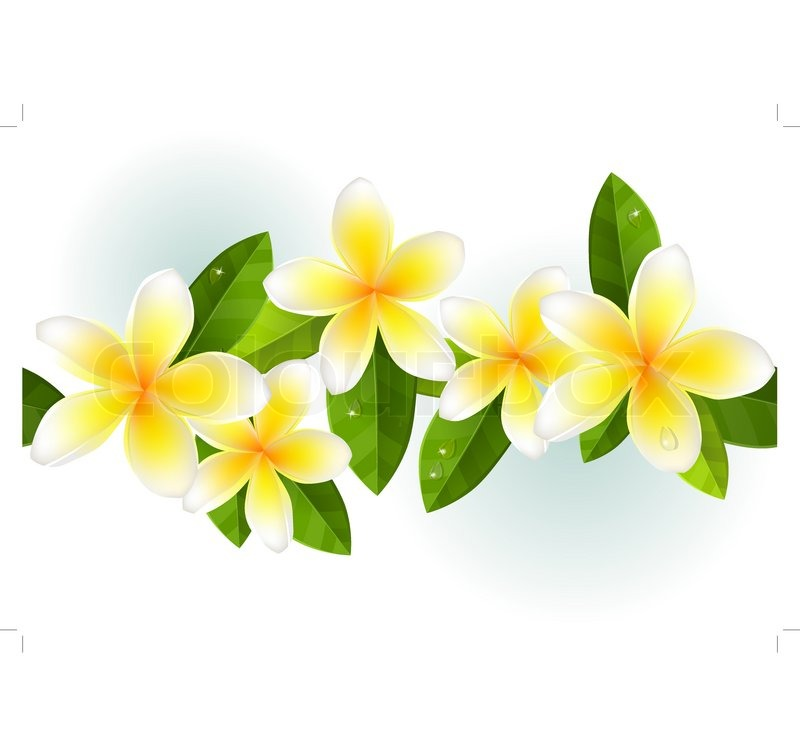 Red flowers border vector stock image - Frangipani Leaves And Dew In Seamless Border Stock