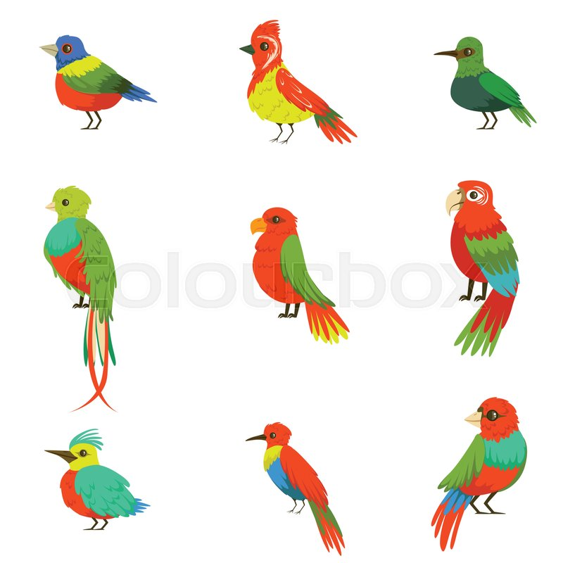 Exotic Birds From Jungle Rain Forest Set Of Colorful Animals Including Species Of Paradise Birds And Parrots. Winged Fauna Of Southern Regions With Bright Color Feathers Vector Illustrations, vector