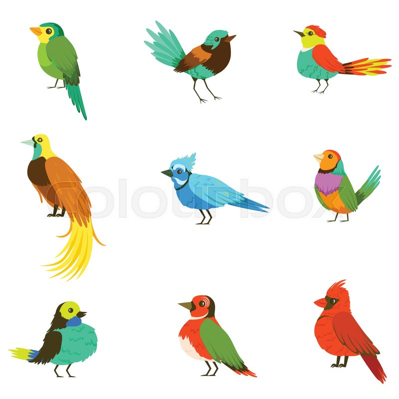 Exotic Birds From Jungle Rain Forest Collection Of Colorful Animals Including Species Of Paradise Birds And Parrots. Winged Fauna Of Southern Regions With Bright Color Feathers Vector Illustrations, vector