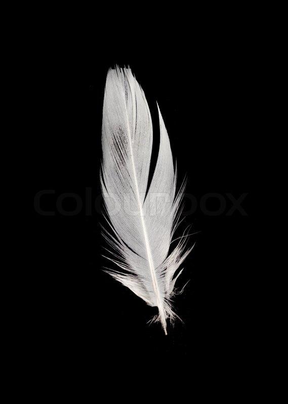 white feather on a black background stock photo colourbox