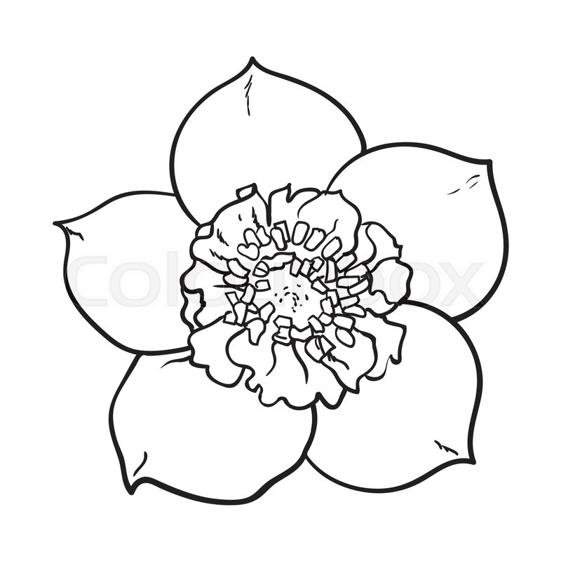 Hellebore christmas rose single flower top view sketch style hellebore christmas rose single flower top view sketch style vector illustration isolated on white background realistic hand drawing of hellebore mightylinksfo