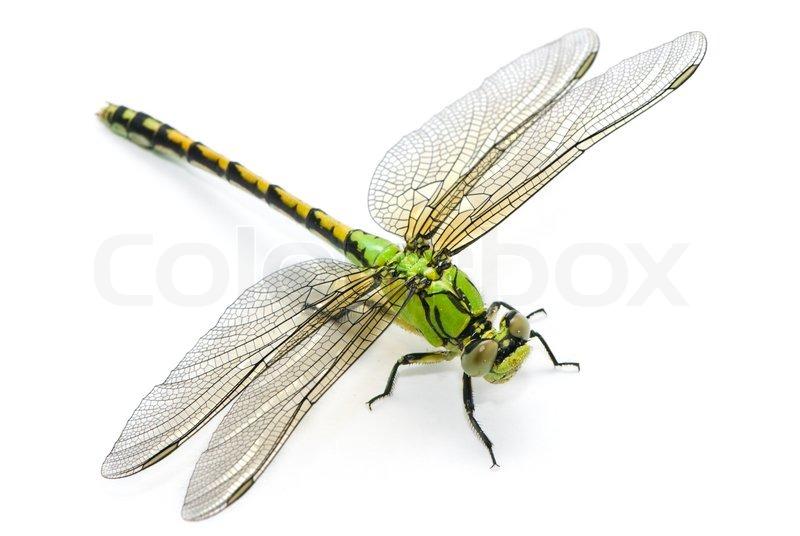 Grüne Flussjungfer Libelle auf weißem Hintergrund | Stockfoto ...